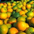 Research on the assessment of the resilience of bergamot producers in Calabria