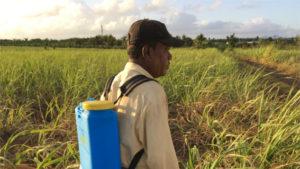 sostenibilità produzione di canna da zucchero Mauritius