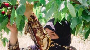qualità ciliegie libano