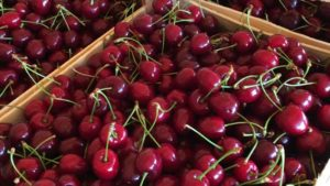 cherry supply chain