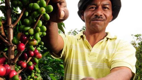 impact evalutuation coffee caffè repubblica domenicana doimincan republic m&E valutazione di impato alimenti sostenibili sustainable food commodities