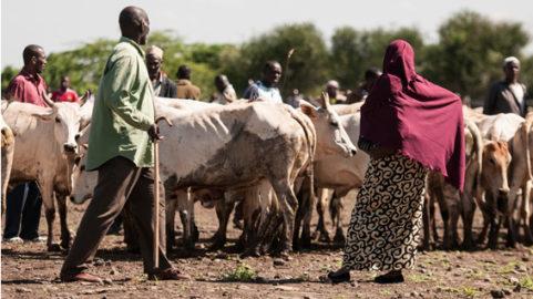 kenya valutazione intermedia e finale di un progetto per rafforzare la resilienza delle comunit locali aglai cambiamenti climatici inclusive development sviluppo inclusivo m&E impact impatto resilience climate change
