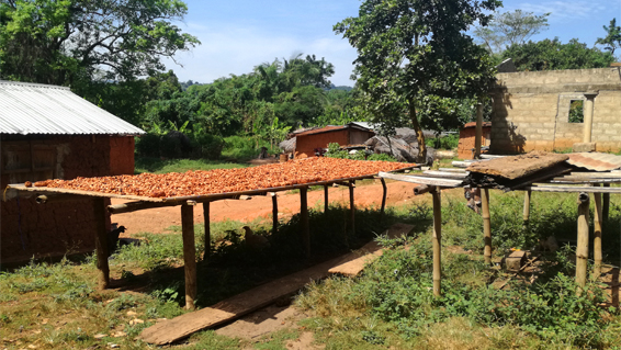 need analysis produttori di fave di cacao in Togo of smma producers of cocoa beans